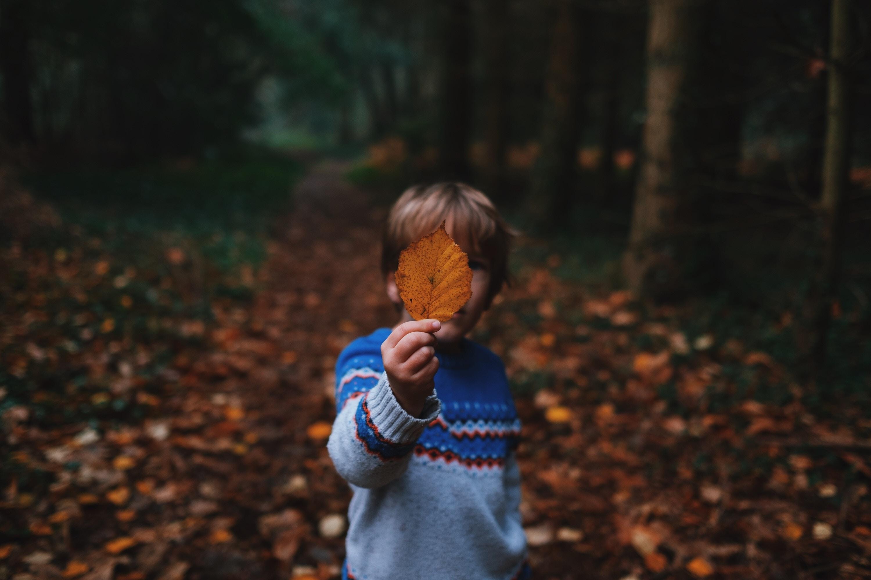 Teaching Kids to Identify Trees