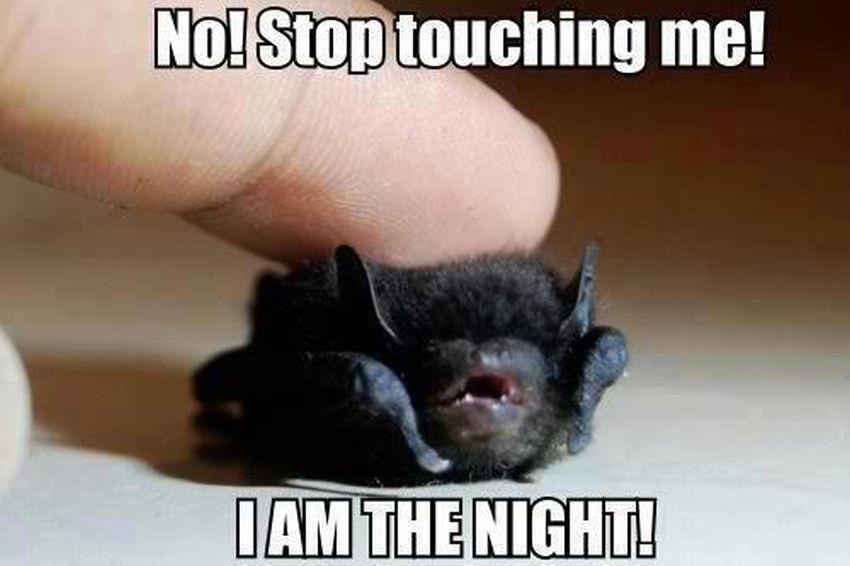 Person Touching Bat