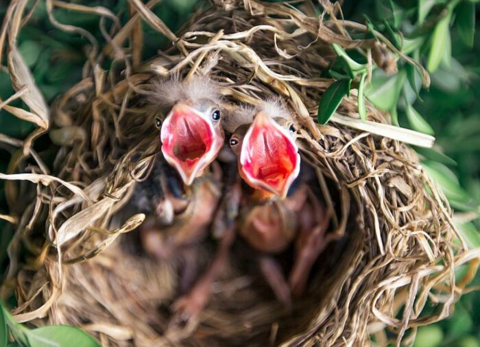 Can You Touch Baby Birds & Other Common Avian Questions