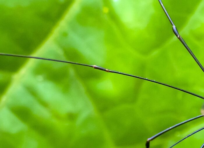 Are Daddy Long Legs Dangerous & Other Common Arachnid Questions