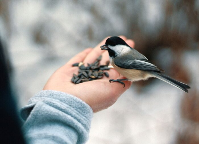 Which Birdseed Attracts the Most Birds?